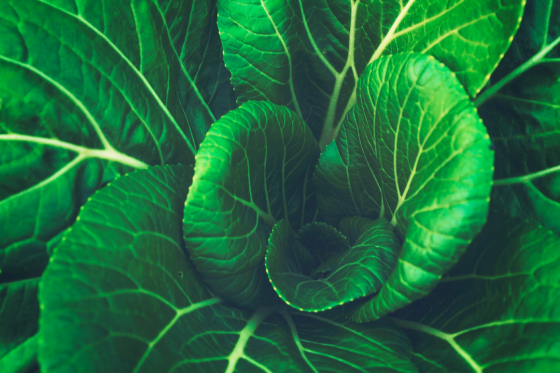 Close up of leafy green vegetables